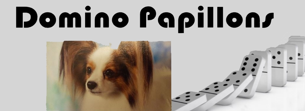 Domino Papillons